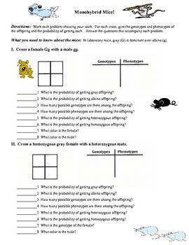 Printables Monohybrid Cross Worksheet we how to work and biology on pinterest this is a two page worksheet that has 4 monohybrid problems each problem requires the student fill in punnett square table of genotypes