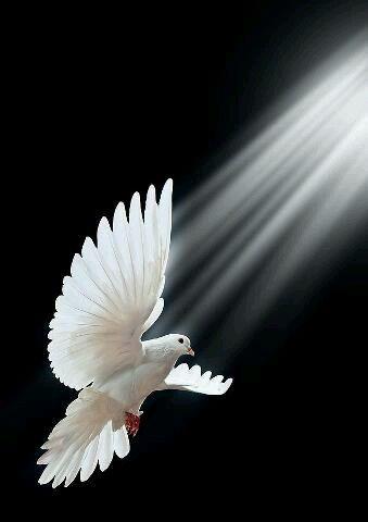 (A white dove, symbolizes)  The Holy Spirit!!: