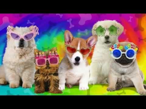 ▶ Barkin' Birthday! - YouTube