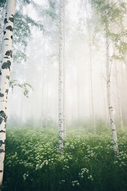 Foggy Forest Mornings By Niilo Isotalo Beautiful Nature Foggy