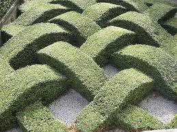 modern topiary gardens - Google Search