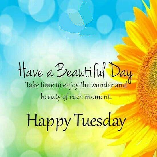 Happytuesday Happy Tuesday Quotes Happy Day Quotes Tuesday Quotes