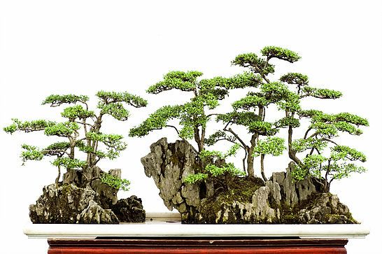 Bonsai Terms Gallery In 2020 Bonsai Bonsai Forest Bonsai Tree