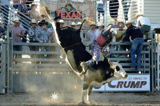 The Right Choice. Wright Bucking Bulls. 904 CAPRIOLA smoke hound
