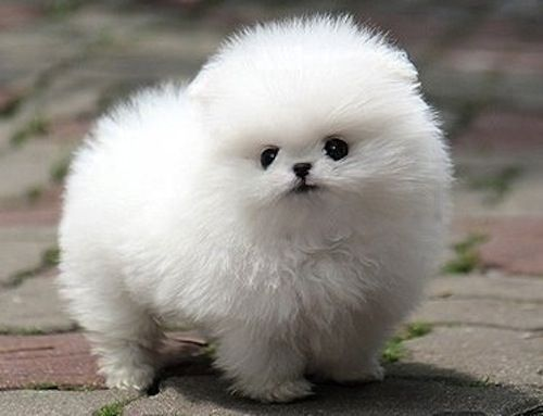 Mister Puff. omg