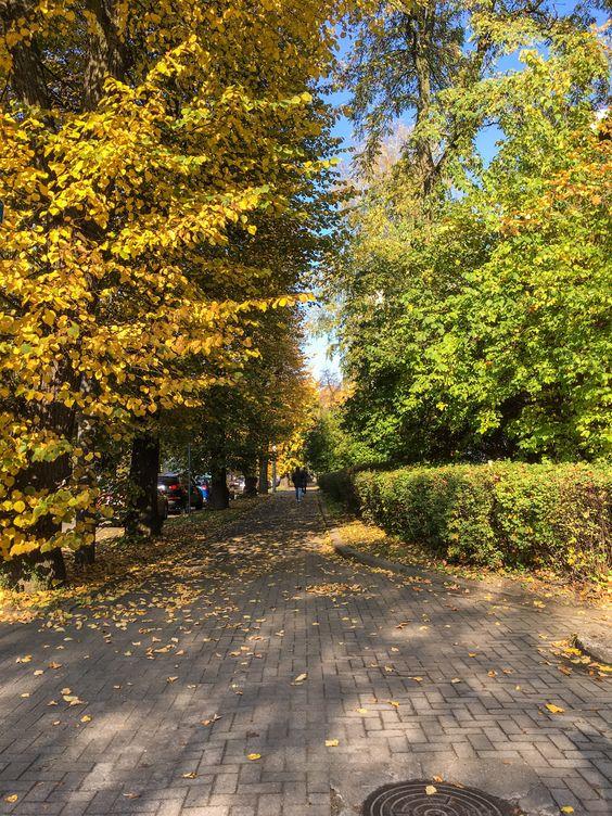 Осеннее убранство улицы Космонавта Леонова в Калининграде. Фото Жени Шведы