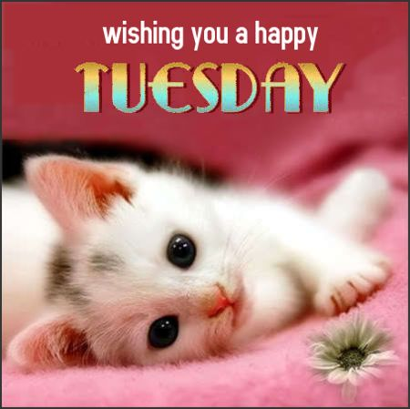 Wishing you a happy Tuesday, day greeting, kitten, cat