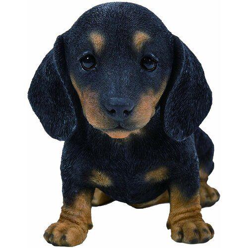 Biggs Pet Pal Dachshund Puppy Black Brown August Grove Dachshund