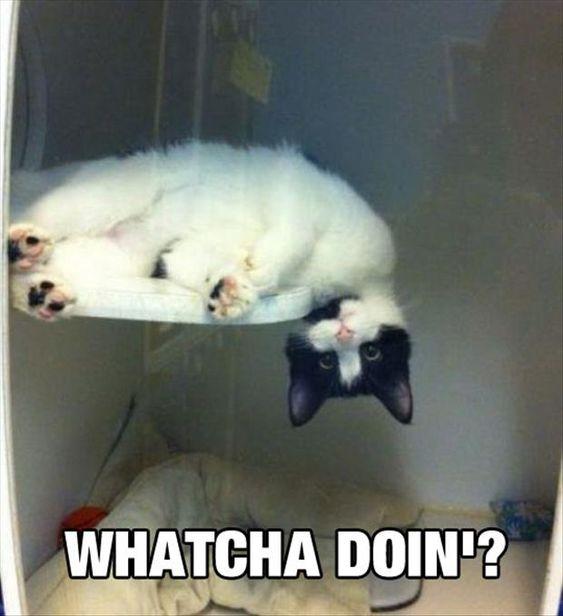 Watcha doin'?: