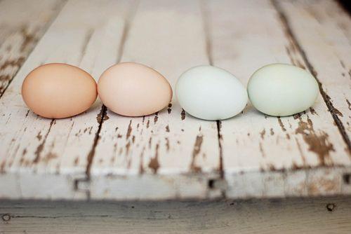 fresh farm eggs, great wall color inspiration