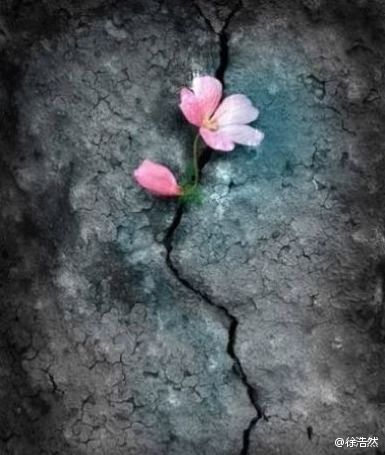 Image result for photo of flower in rock