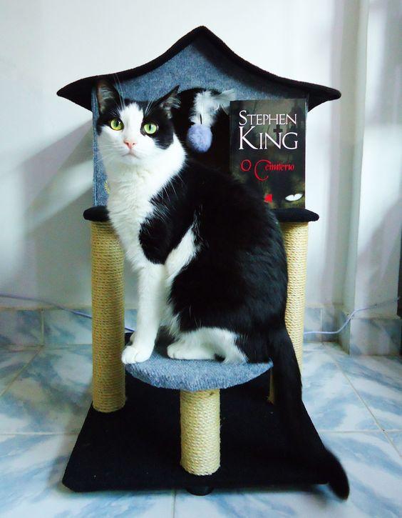 O CEMITÉRIO - Stephen King 😺 | Biblioteca da Rô #bibliotecadaro #booktuber #booktube #livrosdeterror #resenha #ocemiterio #stephenking #petsematary #cemitériomaldito #editorasuma #canalliterario #blogliterario #cat #cute #neko #gato #kawaii