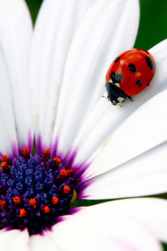 Ladybug over white bed... | Pets, Nature and Towels