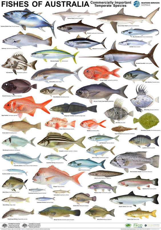 Types of fish what type and fish on pinterest for What kind of fish do i have
