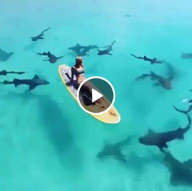 Garota em meio aos tubarões