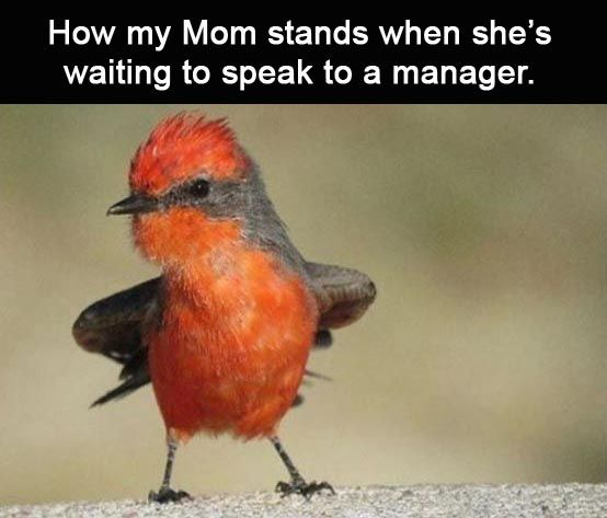 Afternoon Funny Meme Dump 39 Pics Funny Memes Funny Birds Funny