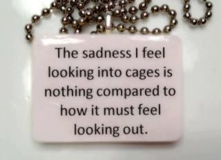 :(: Caged Pets, Animal Rights, Animals Pets, Dogs And Cats, Rescue Animals, Adopted Rescued Dogs, My Heart