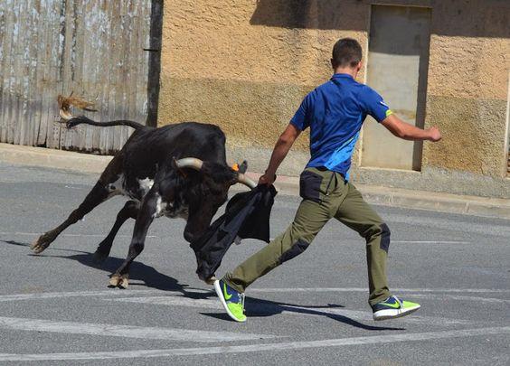 Santacara: Vacas Hermanos Marcen (1)