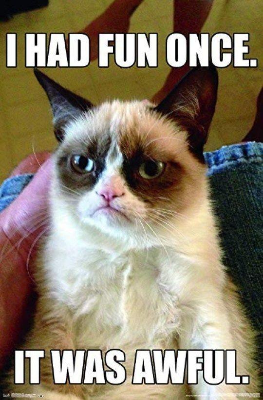 Pin On Funny Grumpy Cat Memes