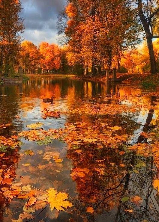 Affordable Landscaping Atlanta Key 2576217637 Autumn Scenery