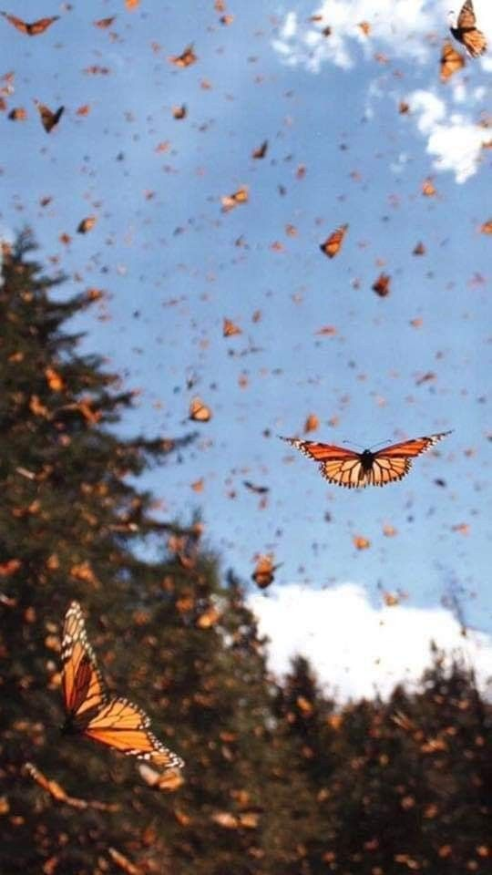 Pin By Pollyanna On Revitalize Butterfly Wallpaper Nature