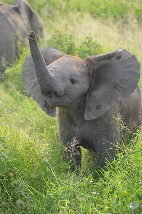Pinterest the world s catalog of ideas for Elephant heart trunk