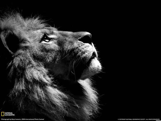 Power of the lion