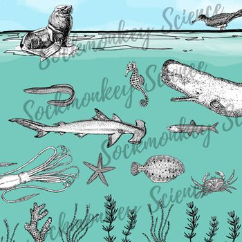 Realistic Ocean Animal Clipart Black And White Marine Food Web Line Art This 20 Piece Sea Life Set Is Ocean Animals Earth Science Elementary School Science