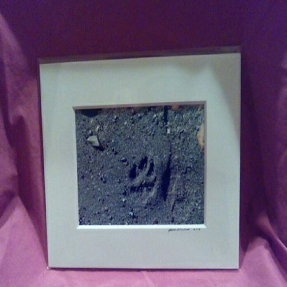 Paw on the Beach- print Signed by the artist and matted Other