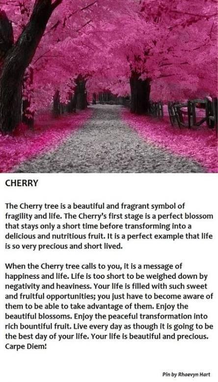 59 Trendy Ideas Yoga Tattoo Tree Cherry Blossoms Cherry Tree Tree Meanings Tree