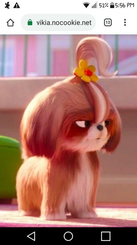 Daisy Shih Tzu La Vida Secreta De Tus Mascotas Mascotas Mascotas Memes