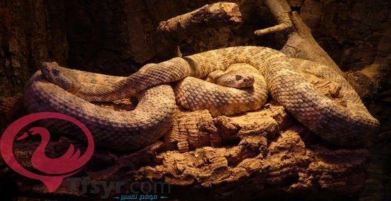 تفسير حلم الثعبان الاصفر للمتزوجه والعزباء والحامل 6 Animals Snake Pet Rocks