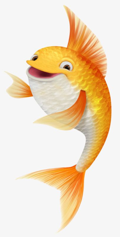 Laughing Koi Fish Fish Clipart Laughing Out Loud Koi Png Transparent Clipart Image And Psd File For Free Download Fish Clipart Fish Illustration Cartoon Fish