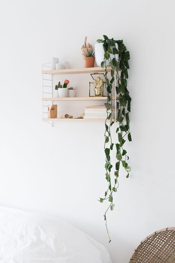 plante d'intérieur sur une étagère