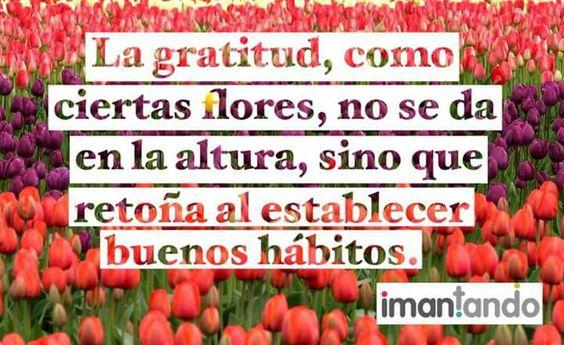 #feliztarde, una frase para pensar en época de #feriadeflores.  #frasesimantando