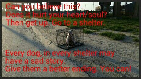 Adopt. Volunteer. Visit. Socialize. Walk dogs. Donate. Help. There are dogs in every shelter with sad stories like this. Help them. YOU can make a difference.