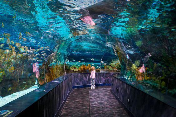 Ripley's Aquarium of the Smokies: Gatlinburg, TN | Young ...
