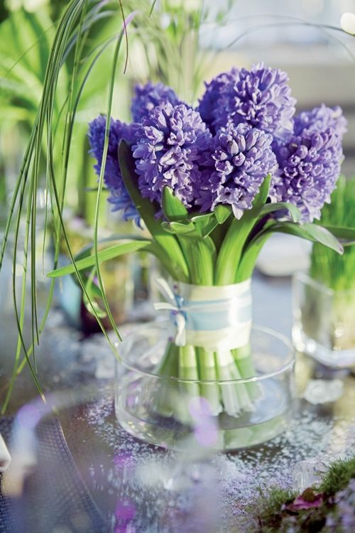 Hyacinth ...SO Pretty
