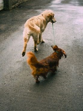 Deux copains en balade