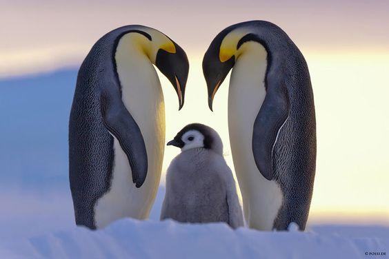 23 photos d'animaux qui posent en famille. Vous allez craquer !