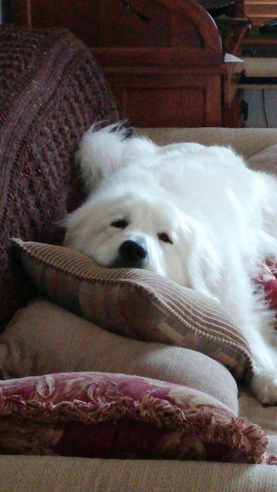 My futon!