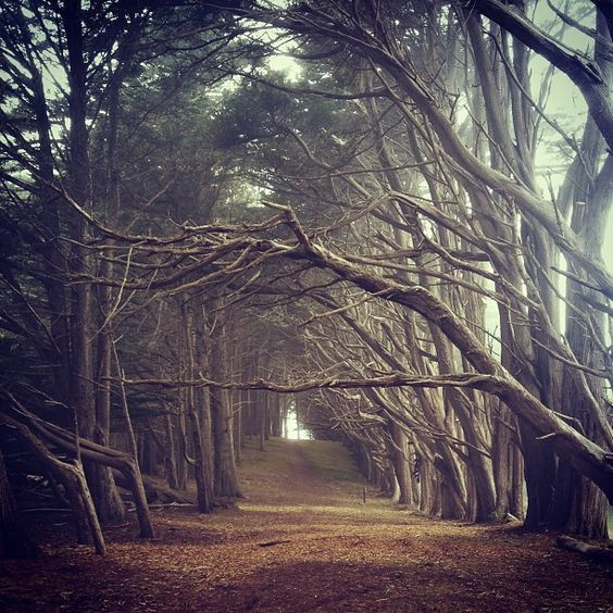 James V Fitzgerald Marine Reserve Cypress Tree Tunnel Oregon Road Trip Place To Shoot
