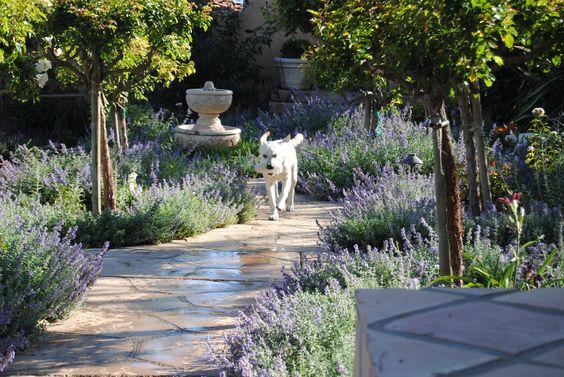 pathway, lavender