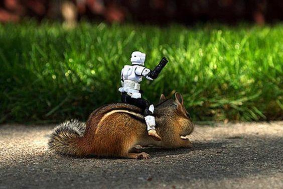 Epic Squirrel Fight Squirrel Star Wars Pinterest Squirrel - Adorable chipmunks go on playful adventures with lego star wars toys