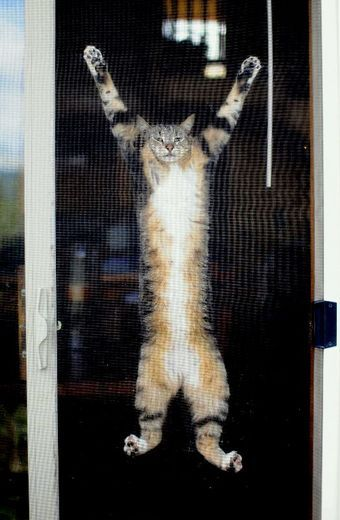 Unfortunately I've seen this many times on my screen door.  Funny from the other side.