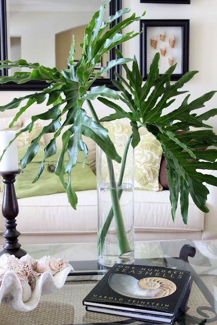 Place cut monstera leaf or any . decorative leaf in a modern vase for a dramtic look that will last nearly a month if the leaf is fresh. #monstera #leaf #modernflowerarrangement: