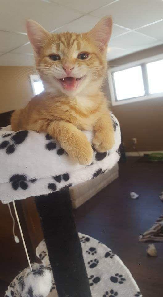 Pin Von Alycea Judd Auf Cute Pets In 2020 Katzen Babytiere Susse Tiere