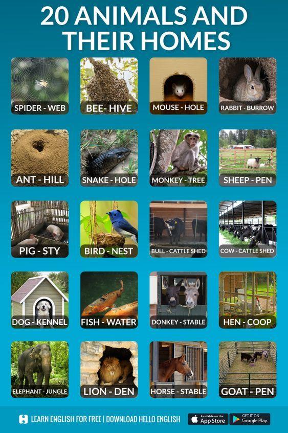Monicatstocker On Twitter English Vocabulary Animals And Their Homes Learn English Vocabulary
