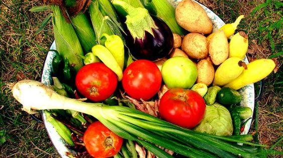 6 consigli per le consociazioni del vostro orto #tips #vegetable #garden #intercropping #aubergines #melanzana #pomodoro #tomato #peperoni #pepperoni #cucumber #cetriolo #zucchina #zucchini #consociazioni #orto #greengarden #howto #mais #corn #pumpkin #zucca #patata #potato #porro #leek