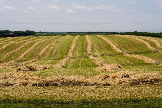 Day 183 ~ a hay field